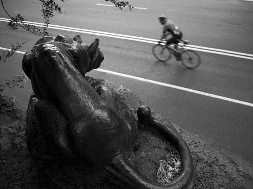 Still Hunt. Photo by Cornelis Verwaal, © 2009.
