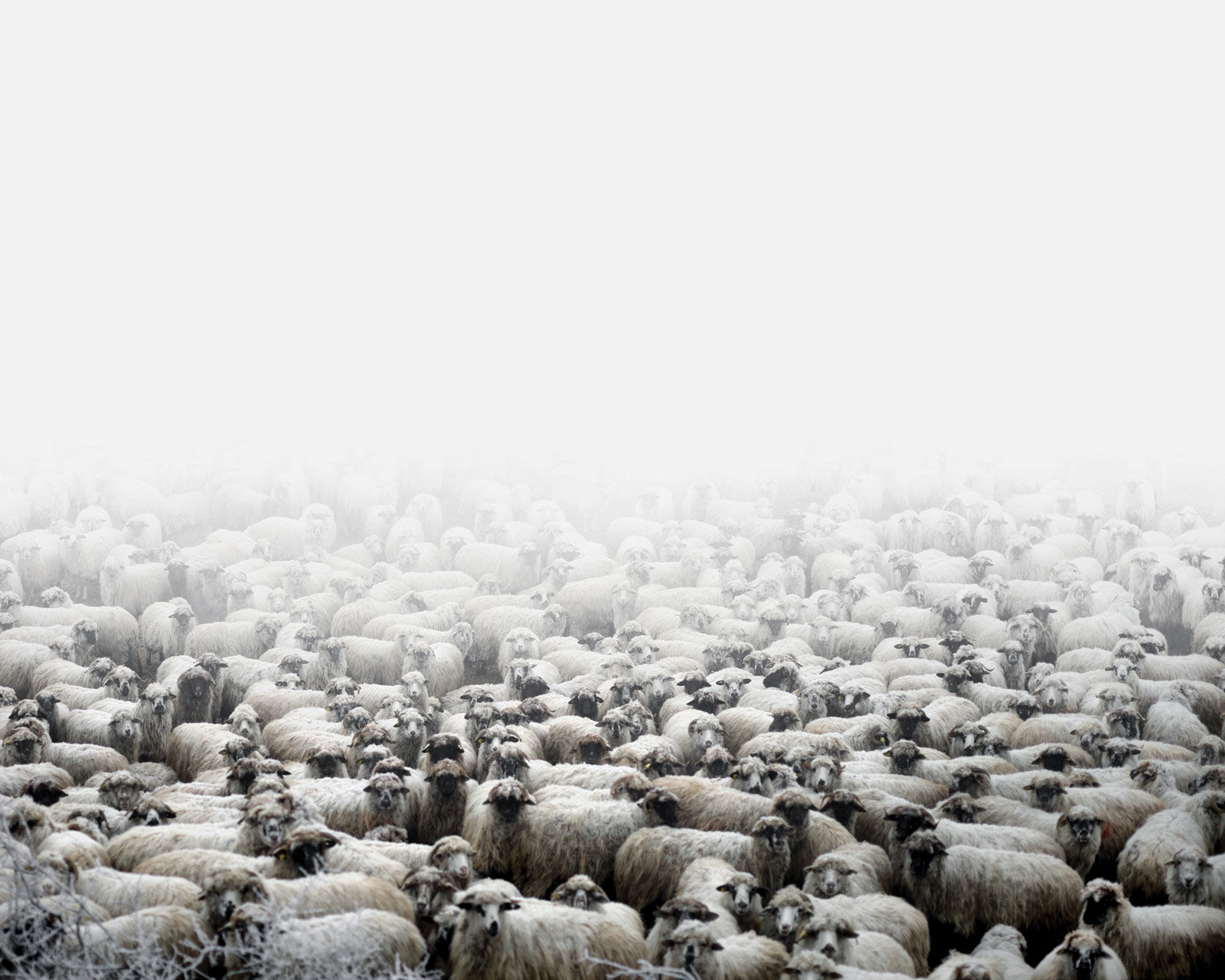 <i>Sheep Farm</i> (Silvasu de Sus, West Romania), 2011