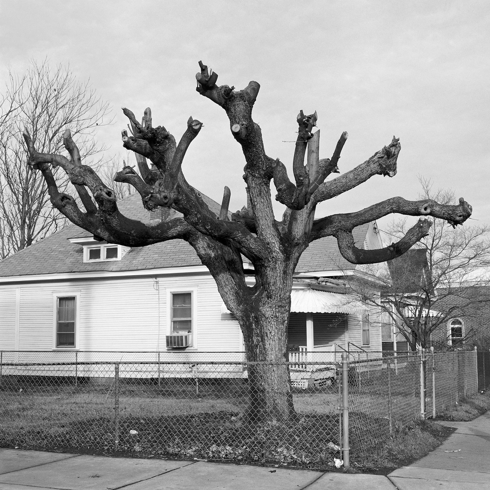 <i>Pruned Tree</i> (2005), Charleston, WV by Lauren Henkin