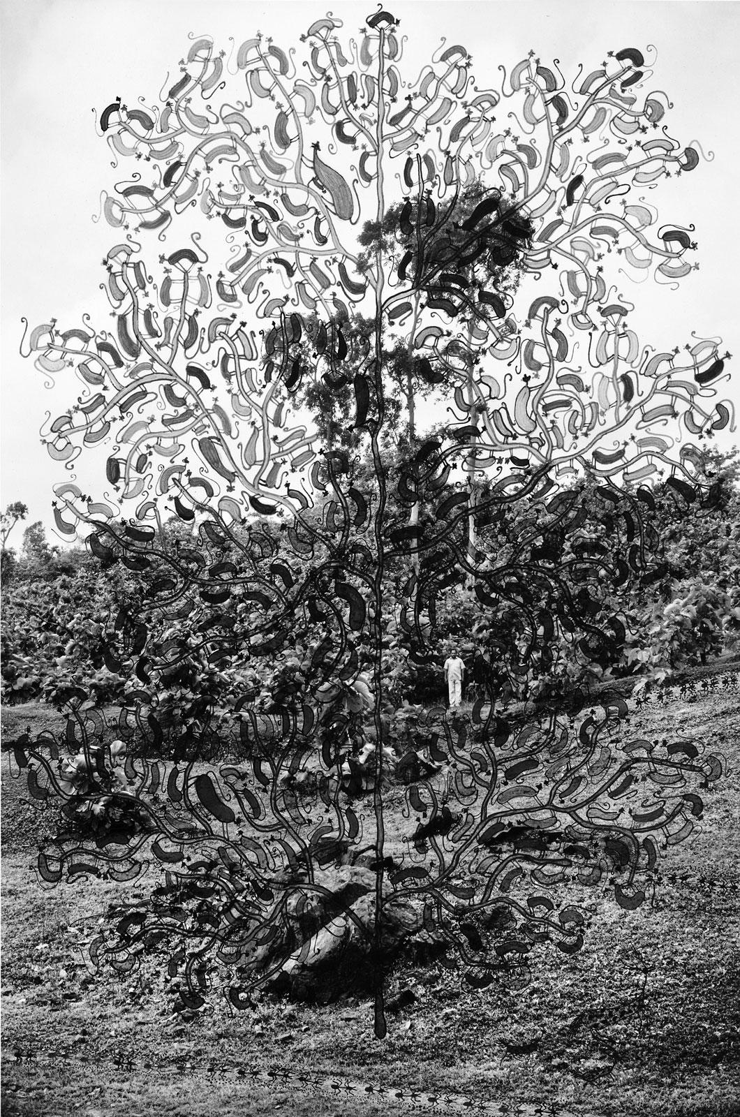 <i>Tree of Monkey Ancestors</i> (2015), 24˝ × 16˝